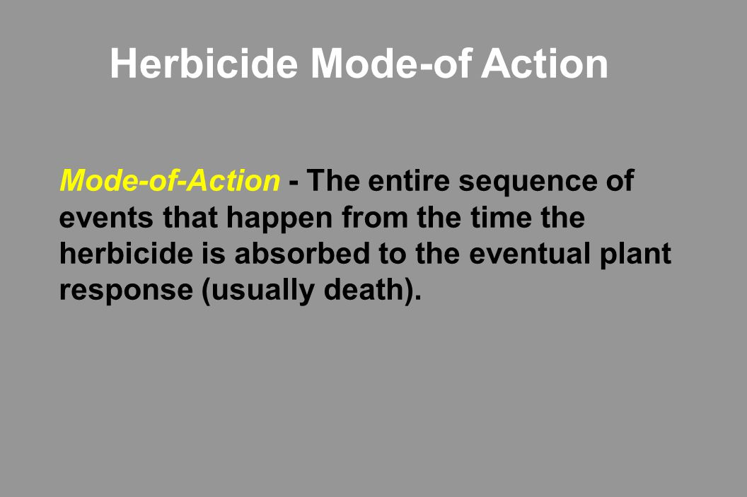 Mode of Action  Three phases *Absorption *Movement to target site *Inhibit biochemical reaction