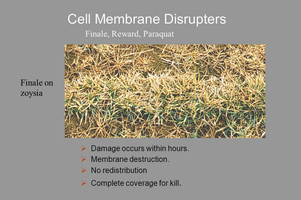 Cell Membrane Disrupters  Damage occurs within hours.