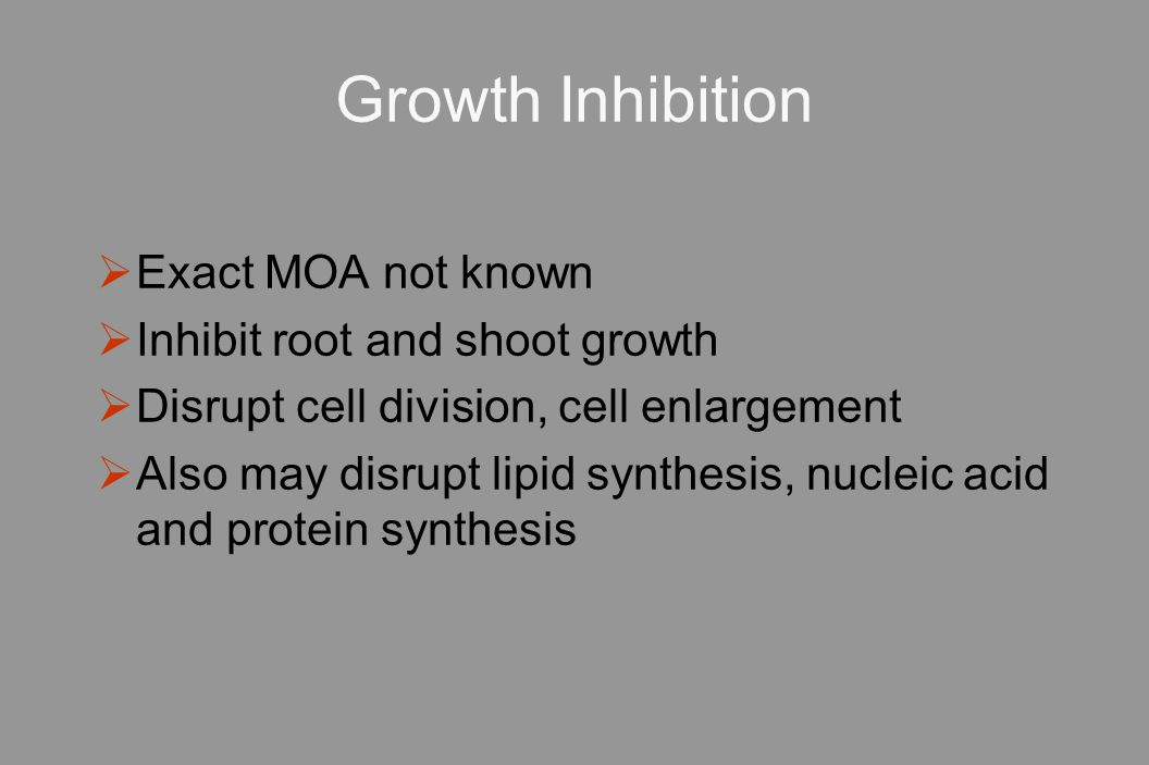 Growth Inhibition  Exact MOA not known  Inhibit root and shoot growth  Disrupt cell division, cell enlargement  Also may disrupt lipid synthesis, nucleic acid and protein synthesis
