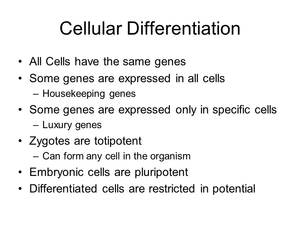 Cellular Differentiation All Cells have the same genes Some genes are expressed in all cells –Housekeeping genes Some genes are expressed only in specific cells –Luxury genes Zygotes are totipotent –Can form any cell in the organism Embryonic cells are pluripotent Differentiated cells are restricted in potential
