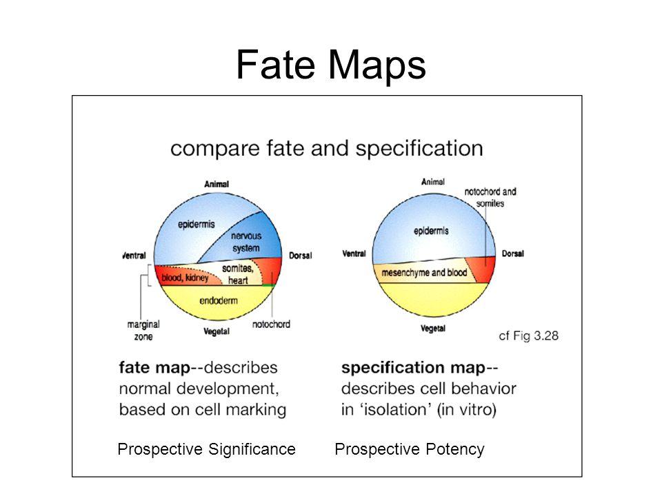 Fate Maps Prospective Significance Prospective Potency