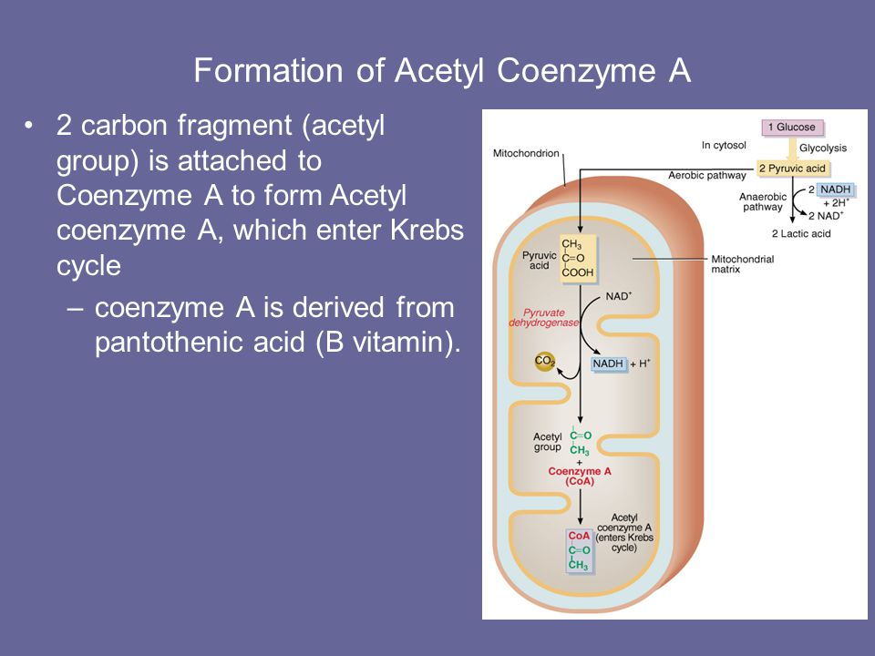 Formation of Acetyl Coenzyme A Pyruvic acid enters the mitochondria with help of transporter protein Decarboxylation –pyruvate dehydrogenase converts 3 carbon pyruvic acid to 2 carbon fragment acetyl group plus CO2.