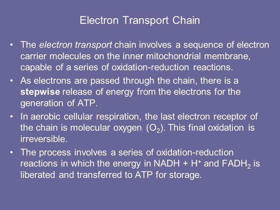Krebs Cycle Potential energy (of chemical bonds) is released step by step to reduce the coenzymes (NAD+  NADH & FAD  FADH2) that store the energy Review: Glucose  2 acetyl CoA molecules each Acetyl CoA molecule that enters the Krebs cycle produces –2 molecules of C02 –3 molecules of NADH + H+ –one molecule of ATP –one molecule of FADH 2