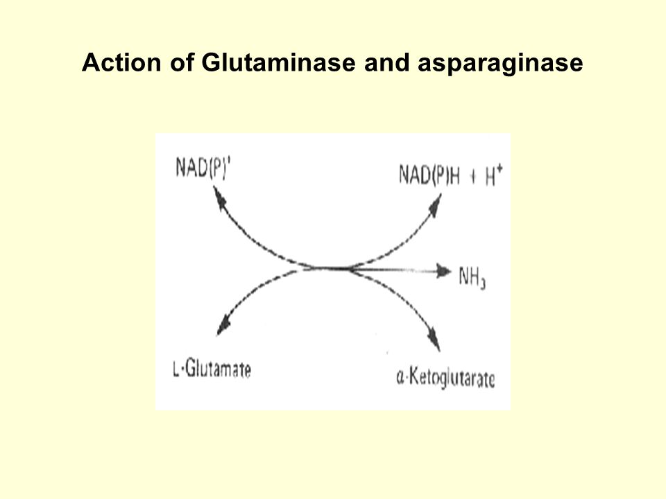 Action of Glutaminase and asparaginase