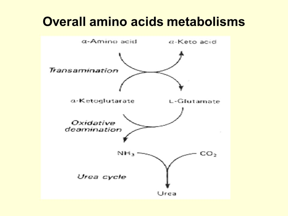 Overall amino acids metabolisms