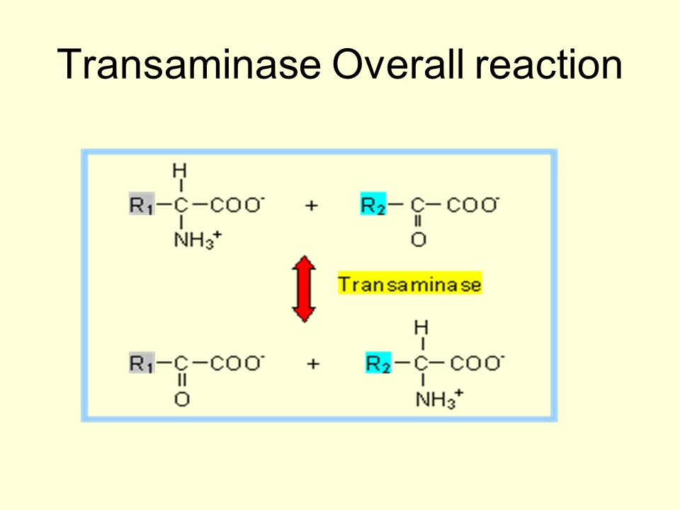 Transaminase Overall reaction
