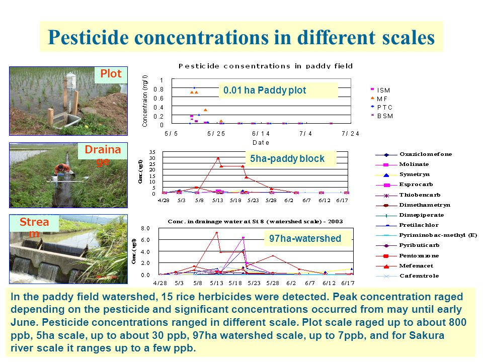 18 Pesticide concentrations in different scales 5ha-paddy block 97ha-watershed 0.01 ha Paddy plot Plot Draina ge Strea m In the paddy field watershed, 15 rice herbicides were detected.