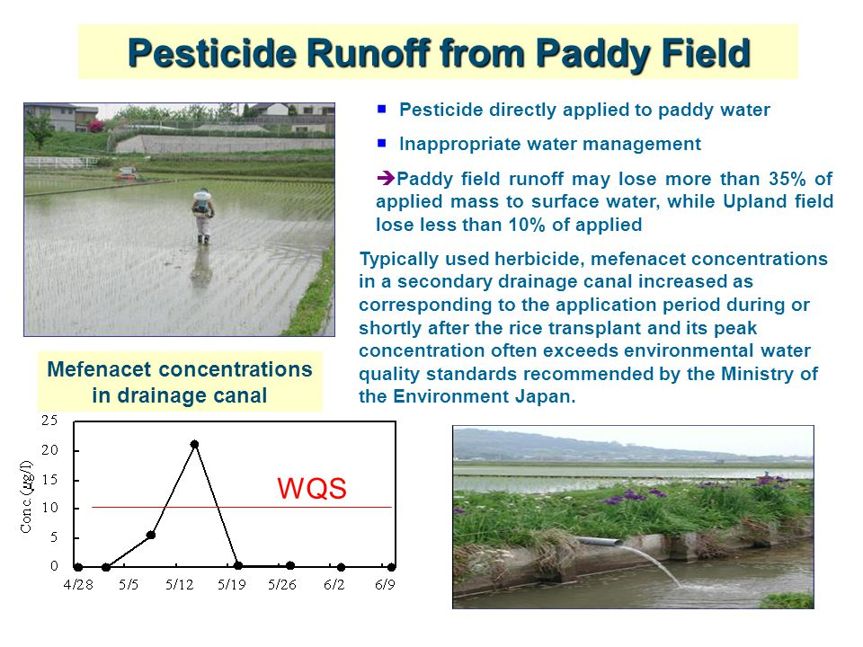 6  Pesticide directly applied to paddy water  Inappropriate water management  Paddy field runoff may lose more than 35% of applied mass to surface water, while Upland field lose less than 10% of applied Pesticide Runoff from Paddy Field Mefenacet concentrations in drainage canal WQS Typically used herbicide, mefenacet concentrations in a secondary drainage canal increased as corresponding to the application period during or shortly after the rice transplant and its peak concentration often exceeds environmental water quality standards recommended by the Ministry of the Environment Japan.