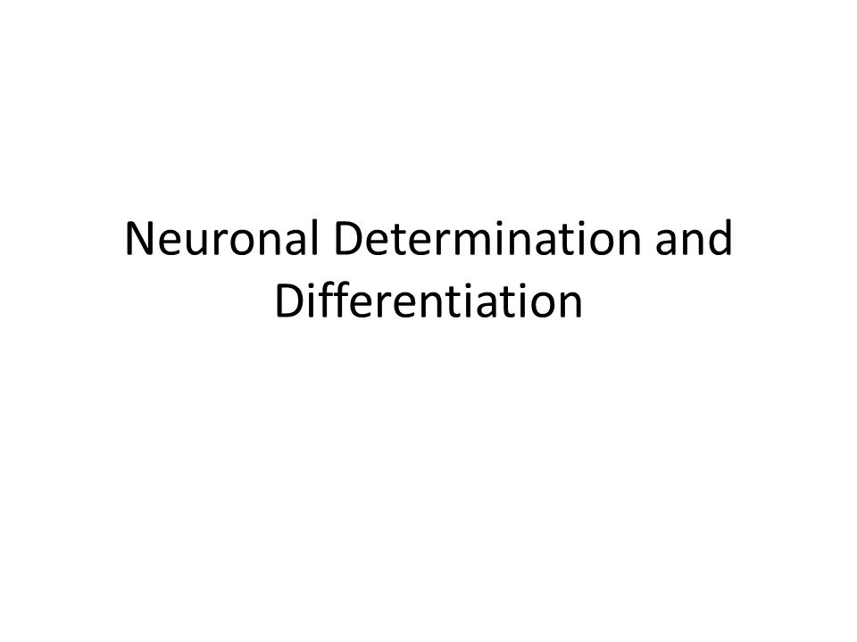 Neuronal Determination and Differentiation