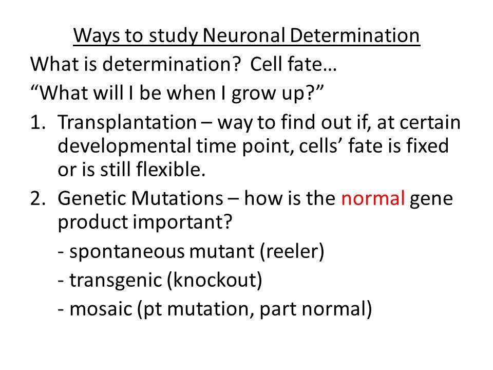 Ways to study Neuronal Determination What is determination.