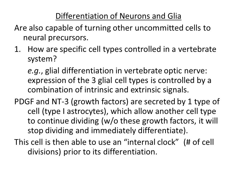 Differentiation of Neurons and Glia Are also capable of turning other uncommitted cells to neural precursors.