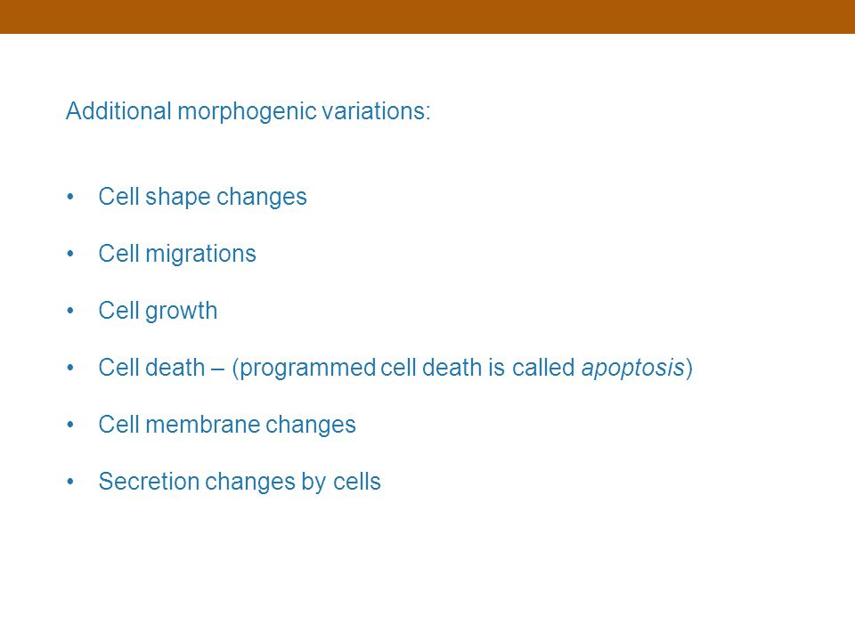 Additional morphogenic variations: Cell shape changes Cell migrations Cell growth Cell death – (programmed cell death is called apoptosis) Cell membra