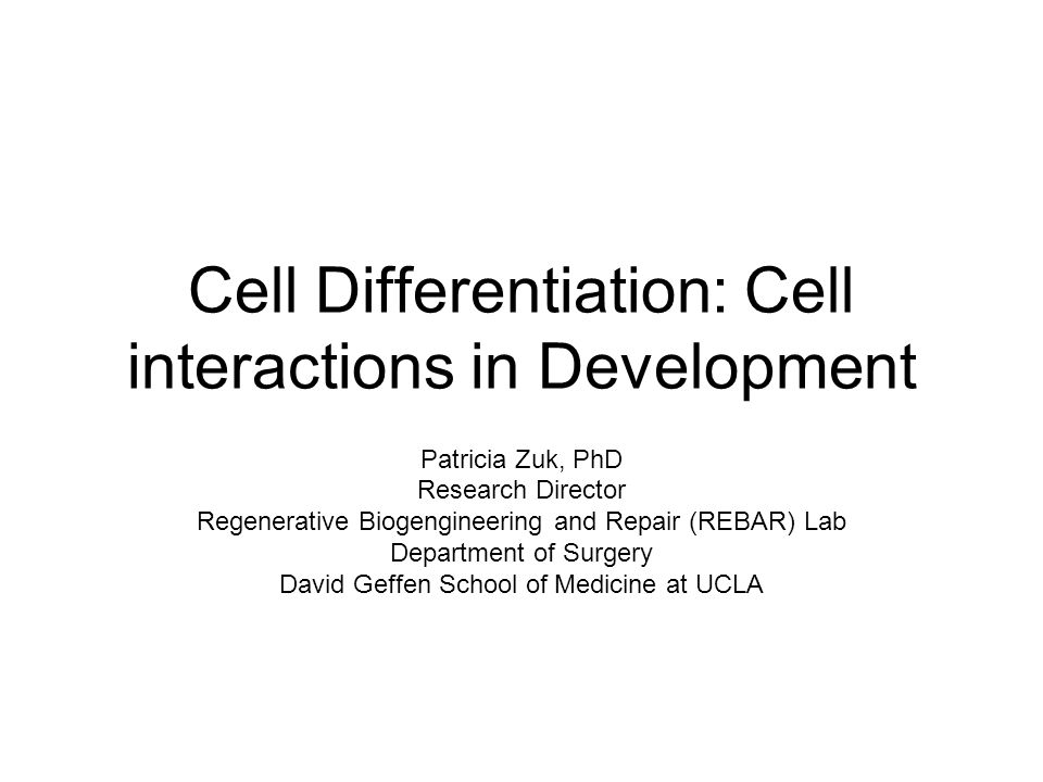 Cell Differentiation: Cell interactions in Development Patricia Zuk, PhD Research Director Regenerative Biogengineering and Repair (REBAR) Lab Departm