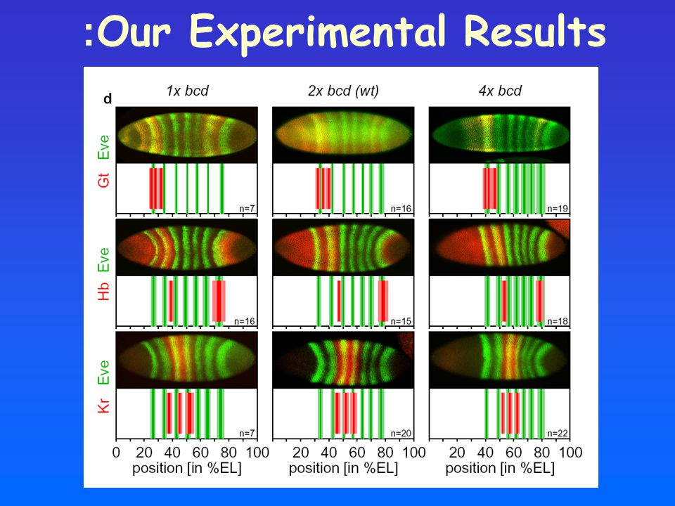 Our Experimental Results: