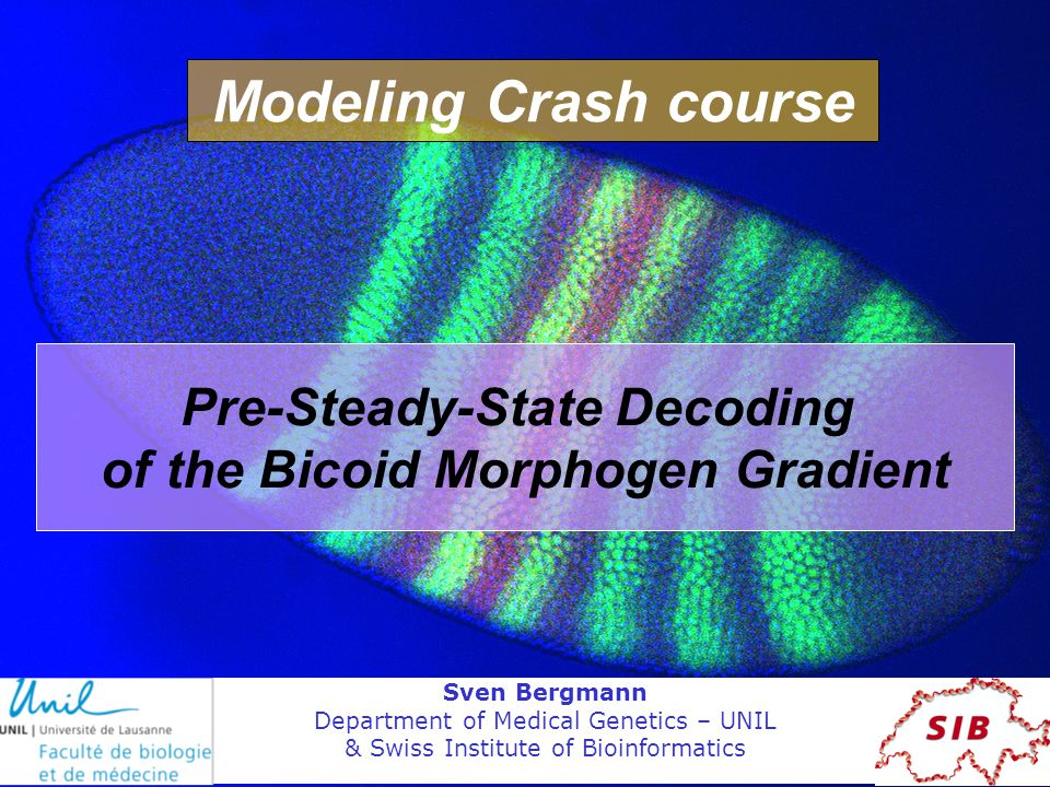 Pre-Steady-State Decoding of the Bicoid Morphogen Gradient Sven Bergmann Department of Medical Genetics – UNIL & Swiss Institute of Bioinformatics Modeling Crash course