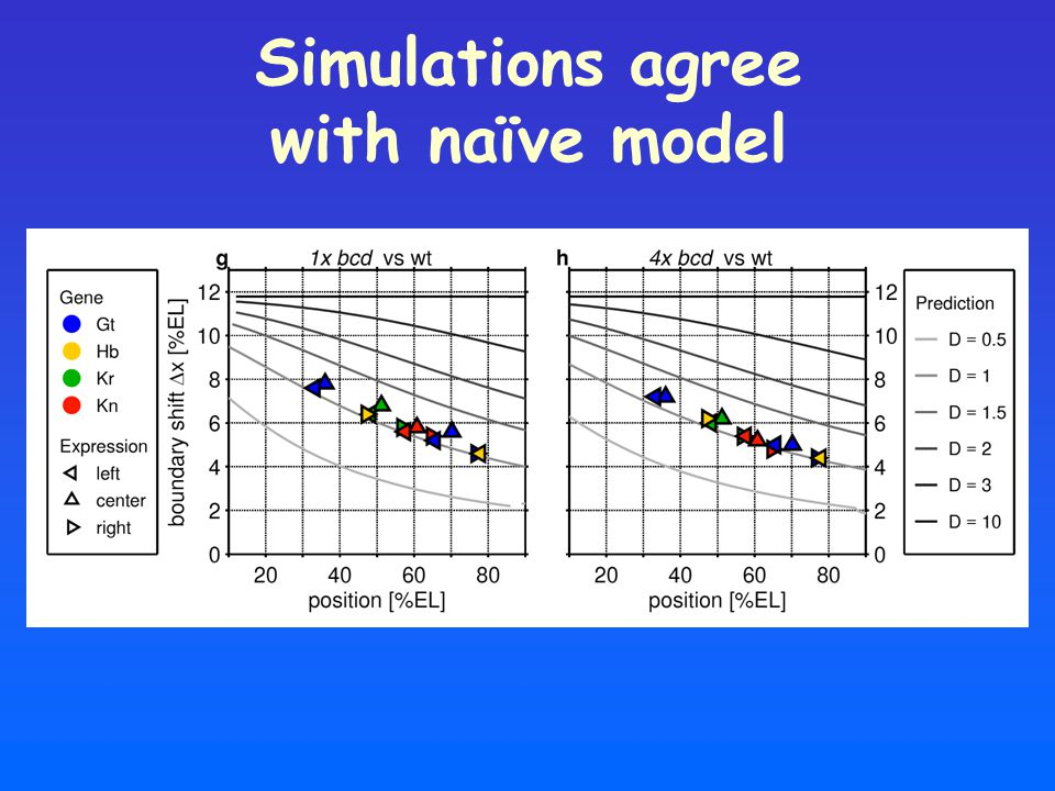 Simulations agree with naïve model