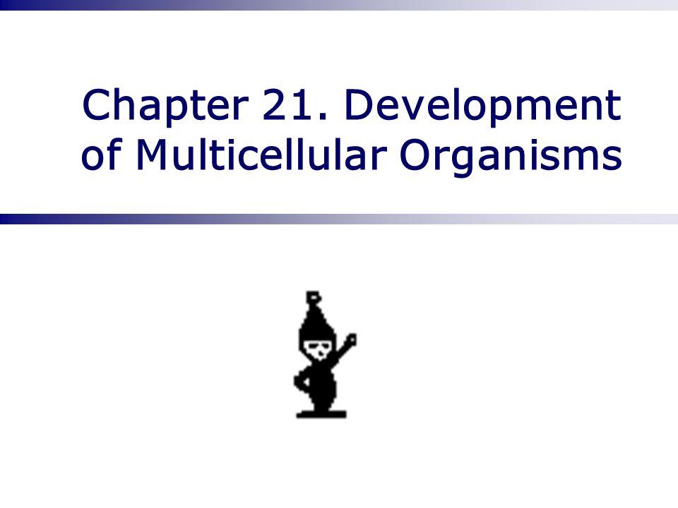 Chapter 21. Development of Multicellular Organisms