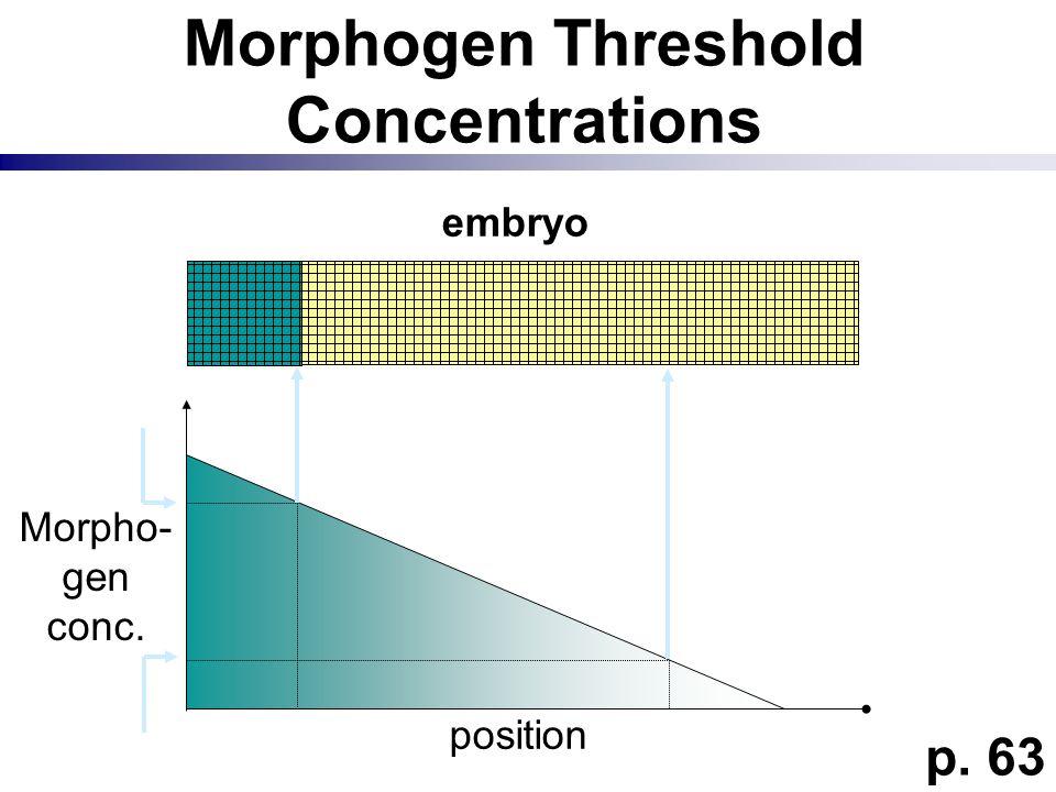 Morphogen Threshold Concentrations embryo p. 63 Morpho- gen conc. position