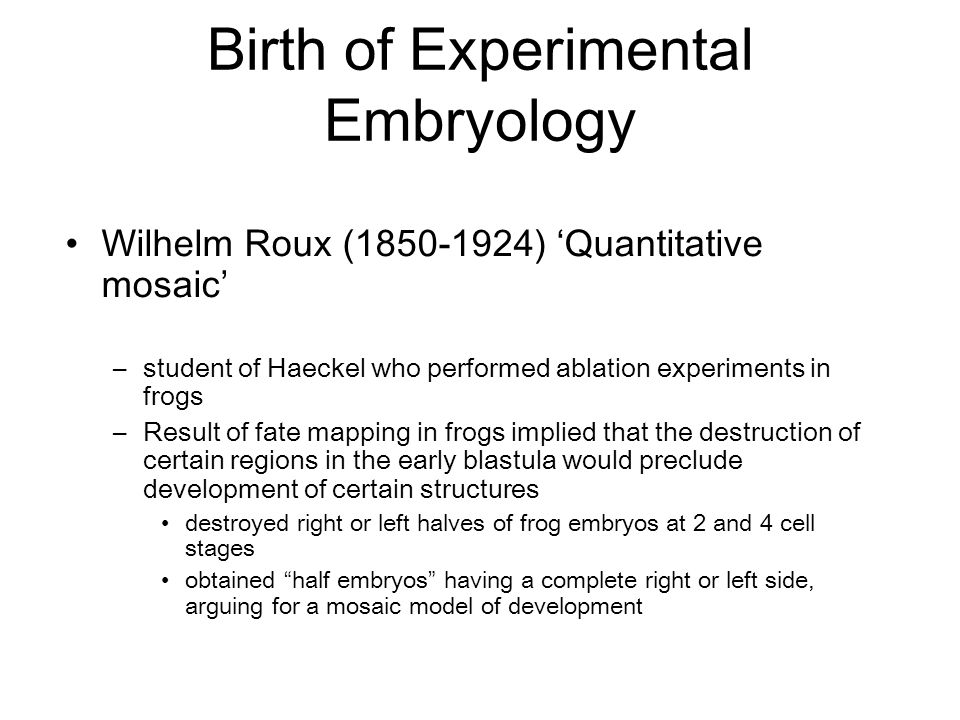 Wilhelm Roux (1850-1924) 'Quantitative mosaic' –student of Haeckel who performed ablation experiments in frogs –Result of fate mapping in frogs implie