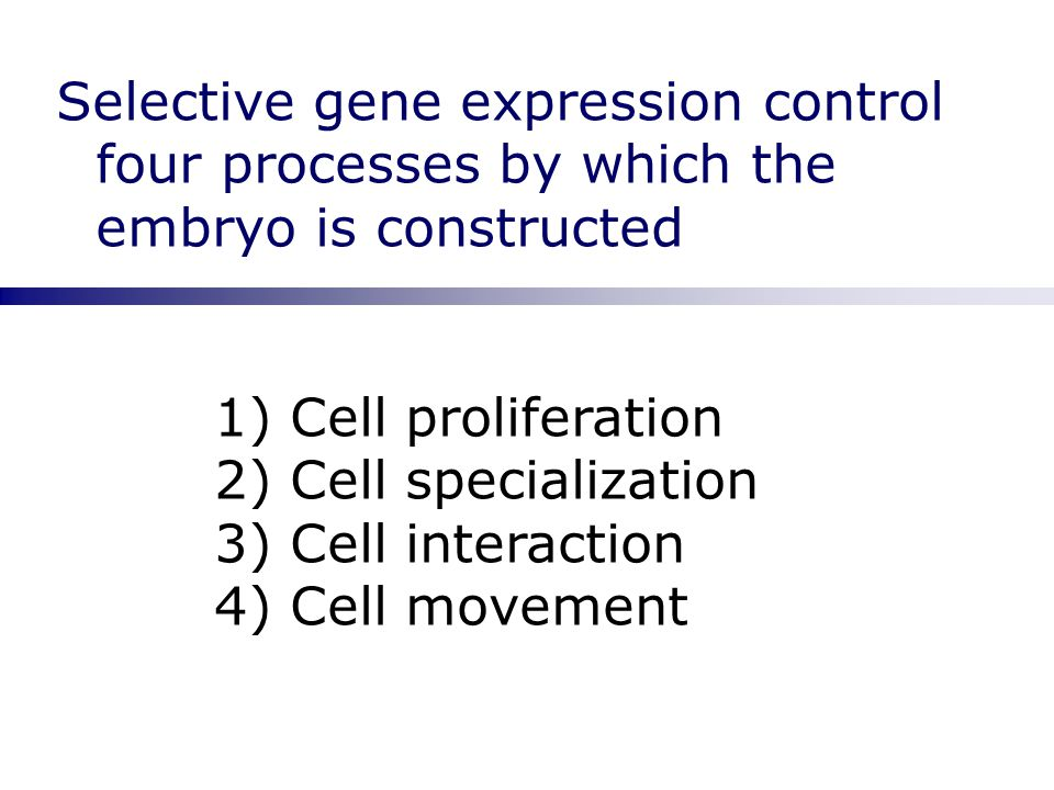 Selective gene expression control four processes by which the embryo is constructed 1) Cell proliferation 2) Cell specialization 3) Cell interaction 4