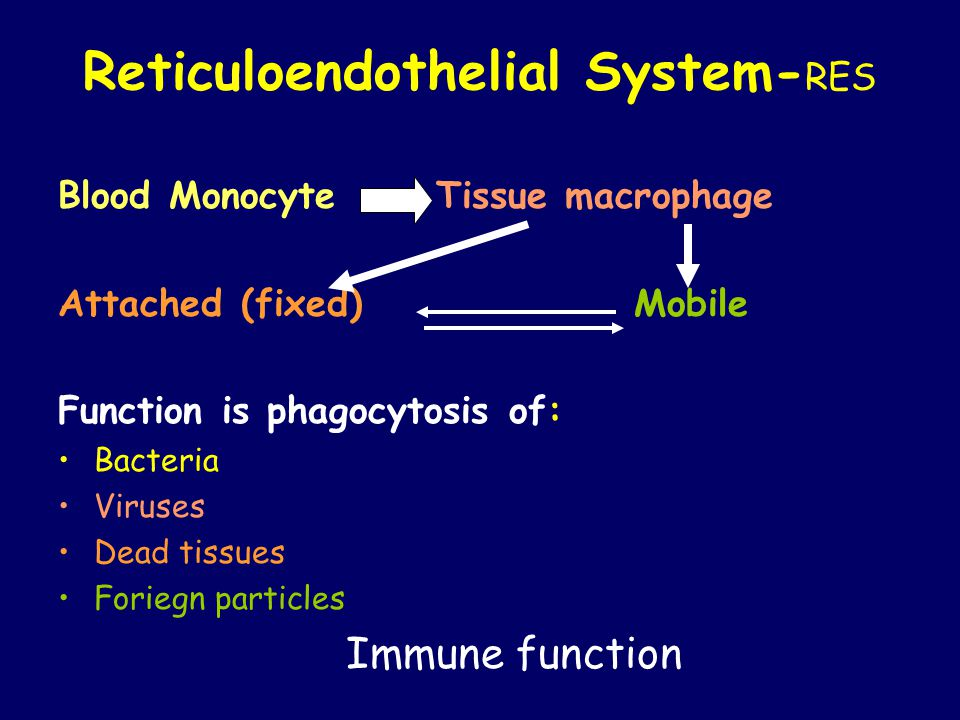 Reticuloendothelial System- RES Blood Monocyte Tissue macrophage Attached (fixed) Mobile Function is phagocytosis of: Bacteria Viruses Dead tissues Foriegn particles Immune function