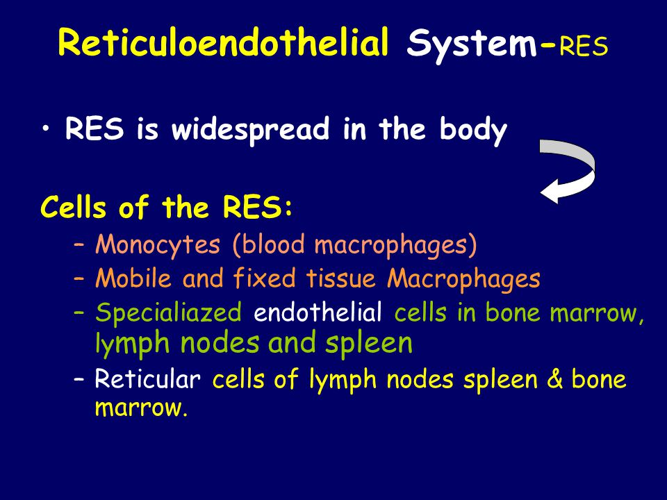 Reticuloendothelial System- RES RES is widespread in the body Cells of the RES: –Monocytes (blood macrophages) –Mobile and fixed tissue Macrophages –Specialiazed endothelial cells in bone marrow, ly mph nodes and spleen –Reticular cells of lymph nodes spleen & bone marrow.
