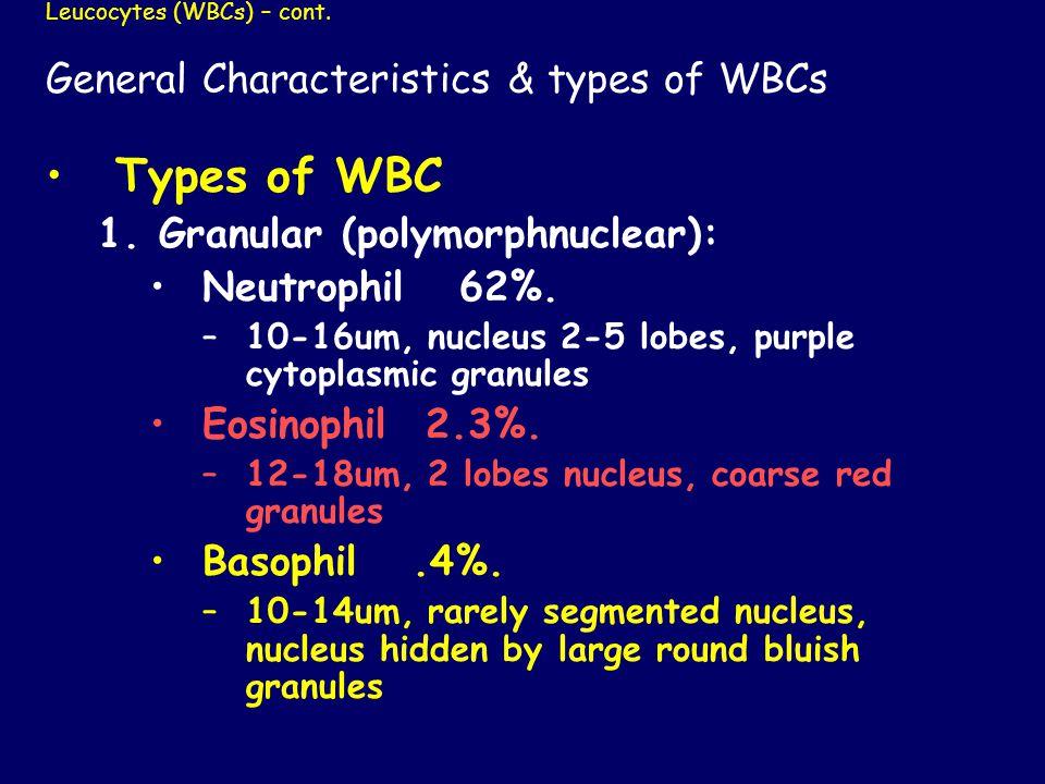 Leucocytes (WBCs) – cont. General Characteristics & types of WBCs Types of WBC 1.Granular (polymorphnuclear): Neutrophil 62%. –10-16um, nucleus 2-5 lo