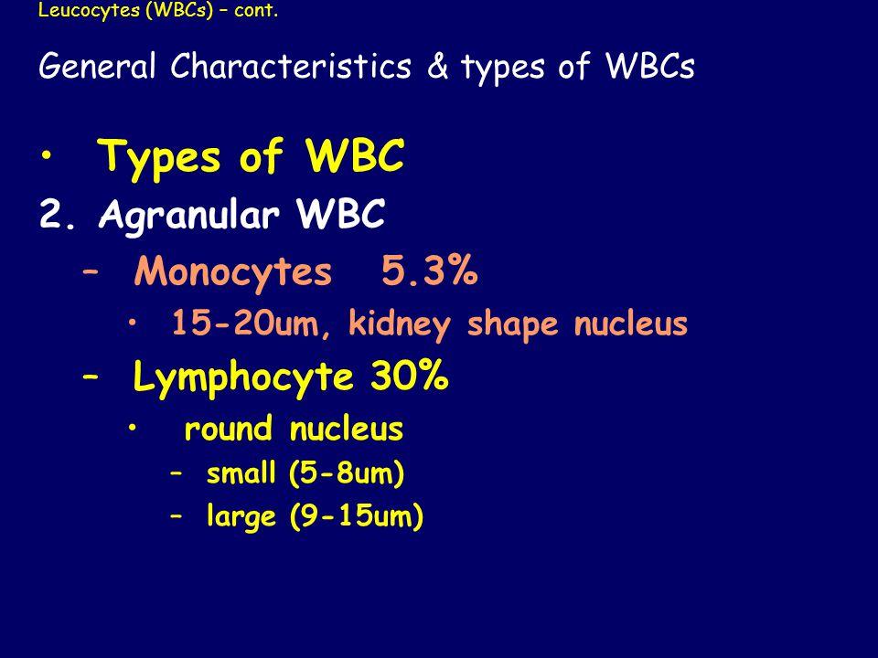 Leucocytes (WBCs) – cont.