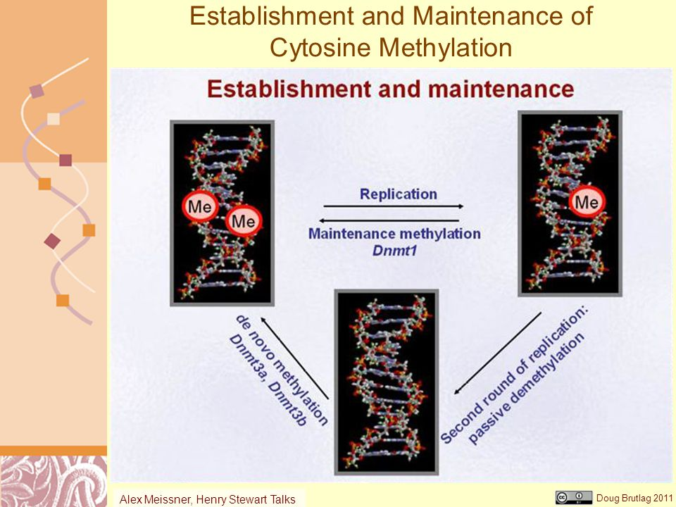 Doug Brutlag 2011 Establishment and Maintenance of Cytosine Methylation Alex Meissner, Henry Stewart Talks