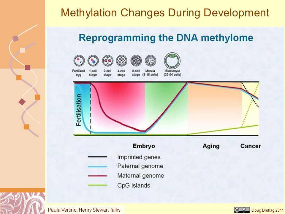 Doug Brutlag 2011 Methylation Changes During Development Paula Vertino, Henry Stewart Talks