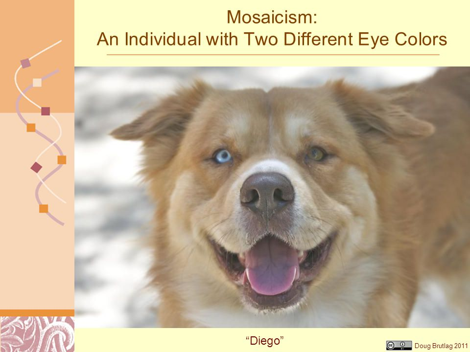 "Doug Brutlag 2011 Mosaicism: An Individual with Two Different Eye Colors ""Diego"""