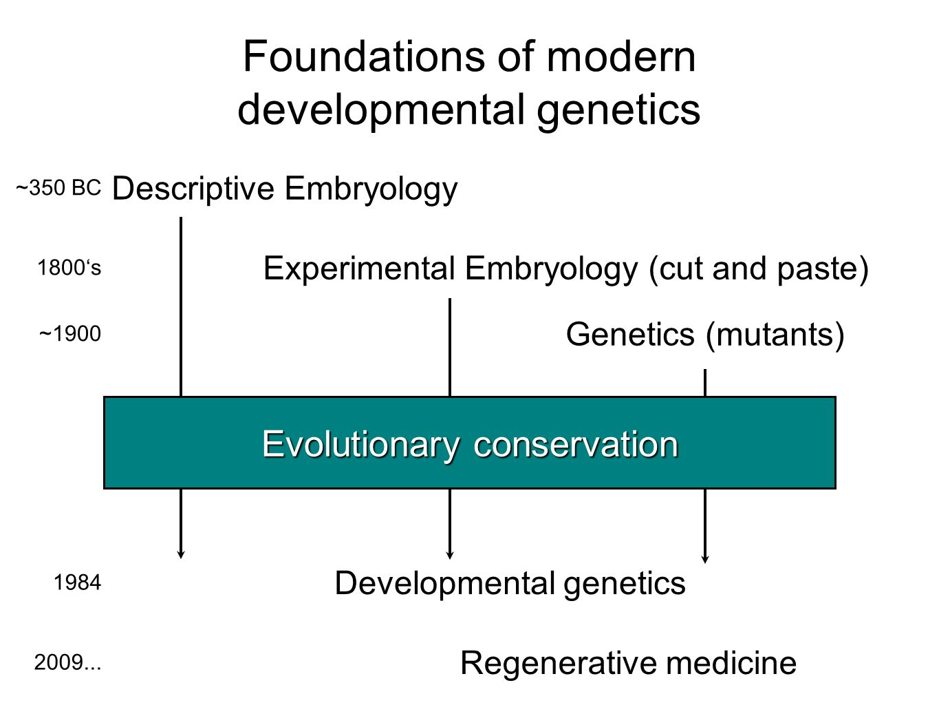 Foundations of modern developmental genetics Descriptive Embryology Experimental Embryology (cut and paste) Genetics (mutants) Developmental genetics Regenerative medicine ~350 BC 1800's ~1900 1984 2009...