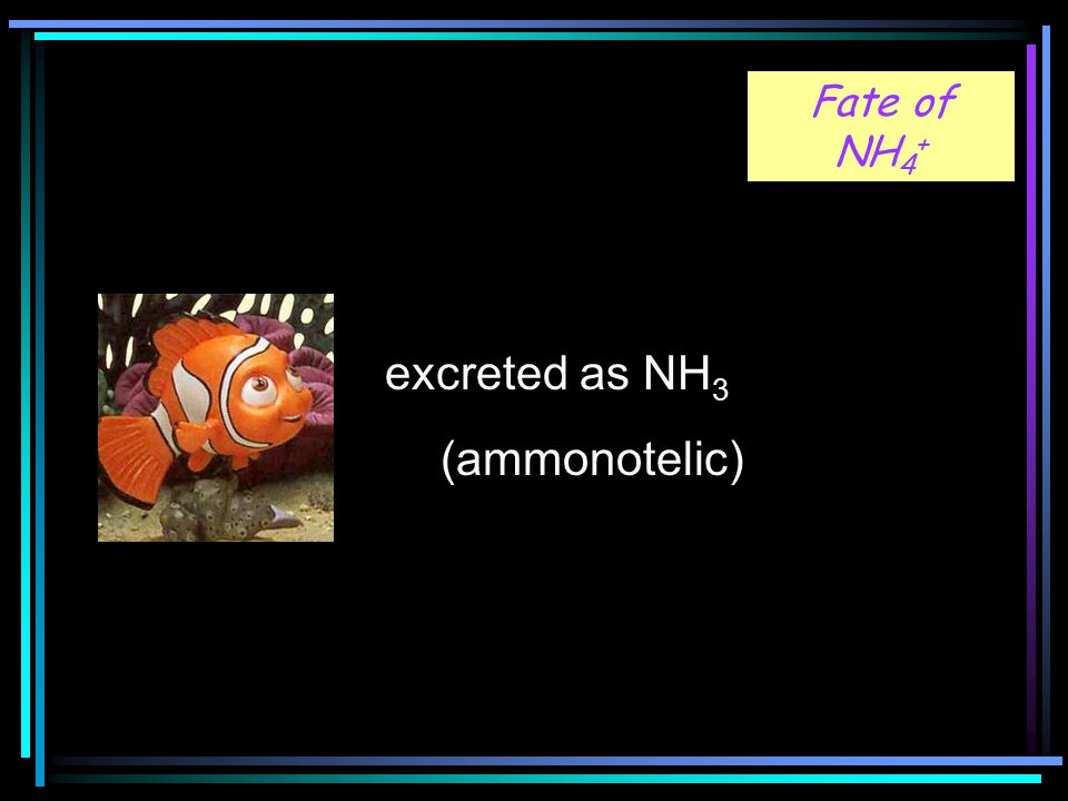 Fig 18-1 Fate of NH 4 + excreted as NH 3 (ammonotelic)