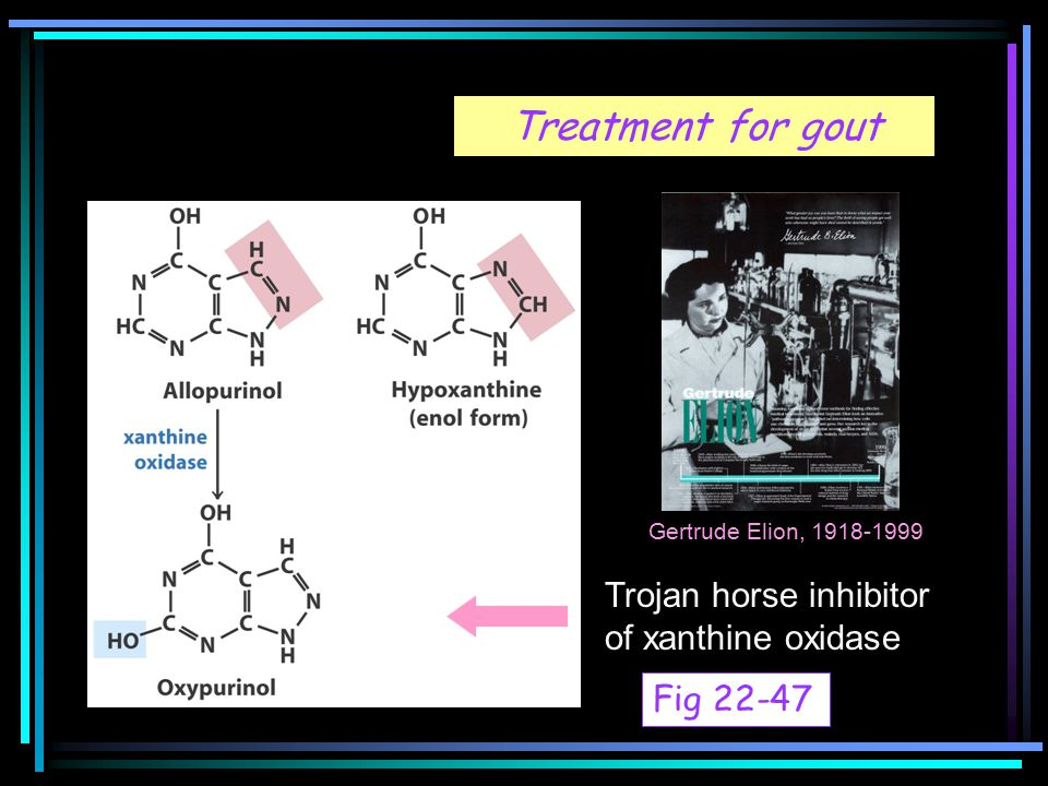 Treatment for gout Trojan horse inhibitor of xanthine oxidase Gertrude Elion, 1918-1999 Fig 22-47