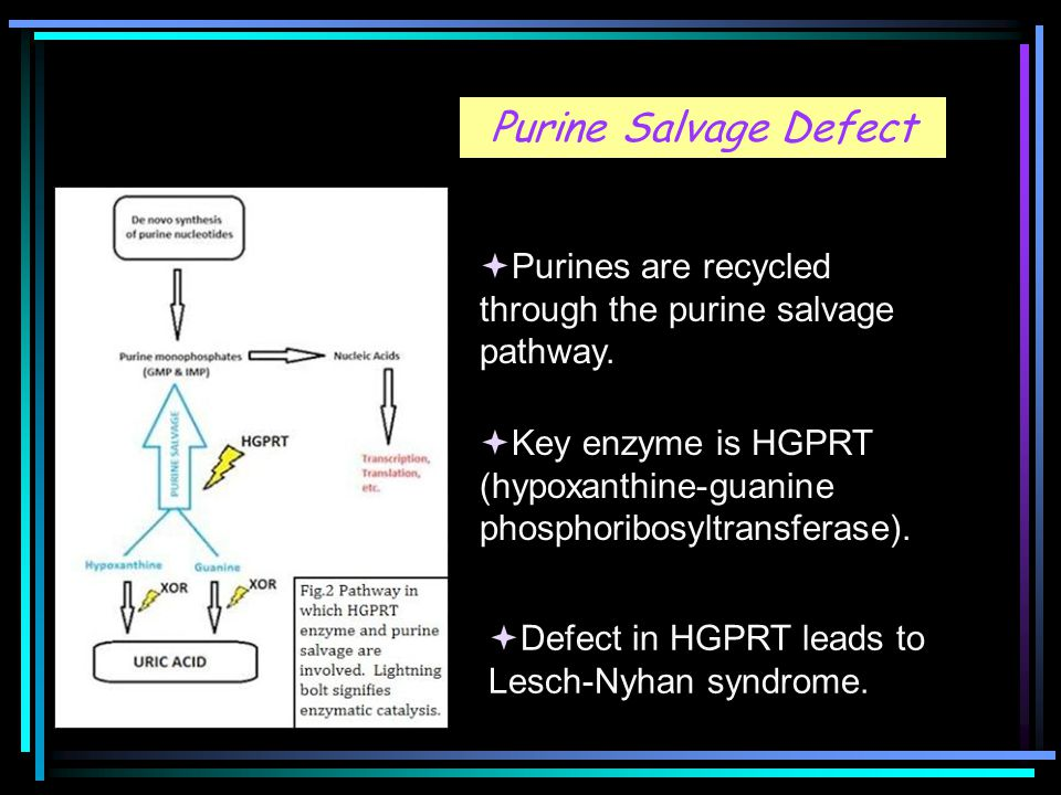 Purine Salvage Defect  Purines are recycled through the purine salvage pathway.