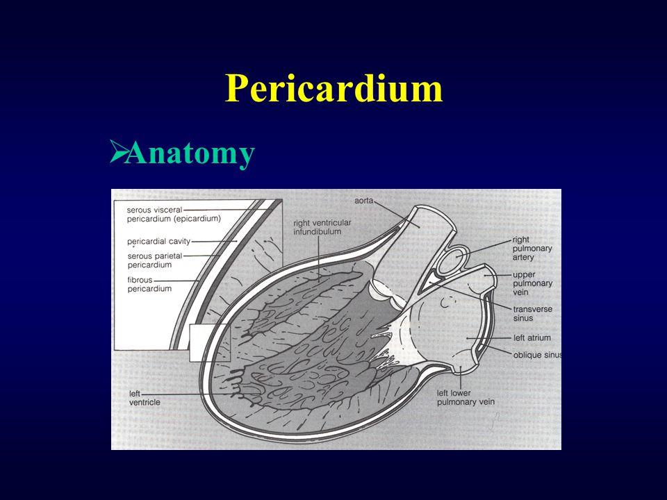 Pericardium  Anatomy