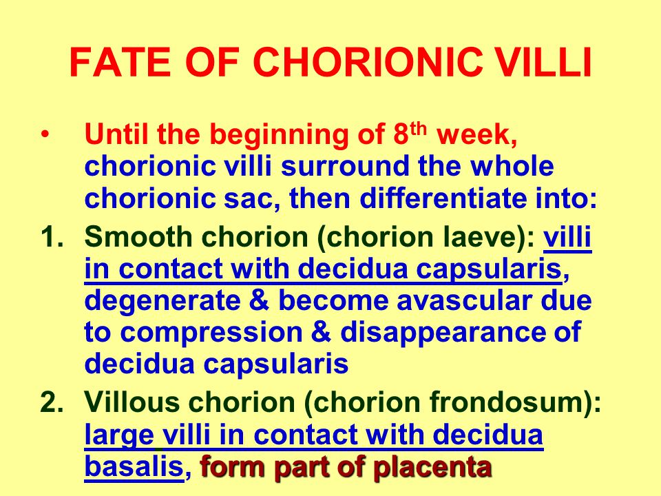FATE OF CHORIONIC VILLI Until the beginning of 8 th week, chorionic villi surround the whole chorionic sac, then differentiate into: 1.Smooth chorion