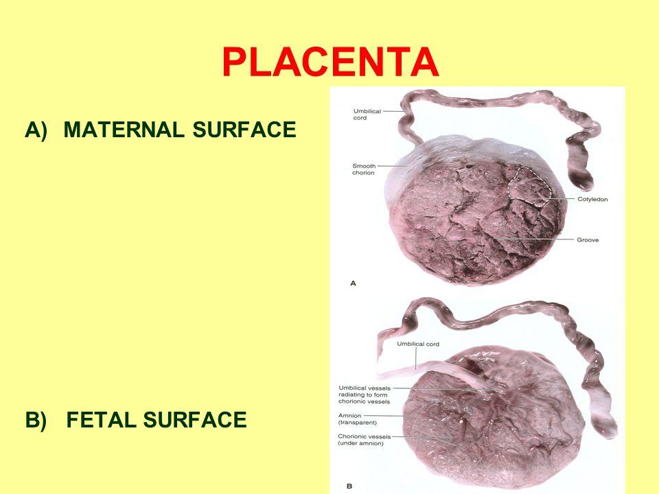PLACENTA A)MATERNAL SURFACE B) FETAL SURFACE