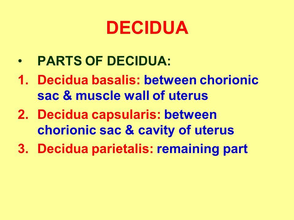 DECIDUA PARTS OF DECIDUA: 1.Decidua basalis: between chorionic sac & muscle wall of uterus 2.Decidua capsularis: between chorionic sac & cavity of ute