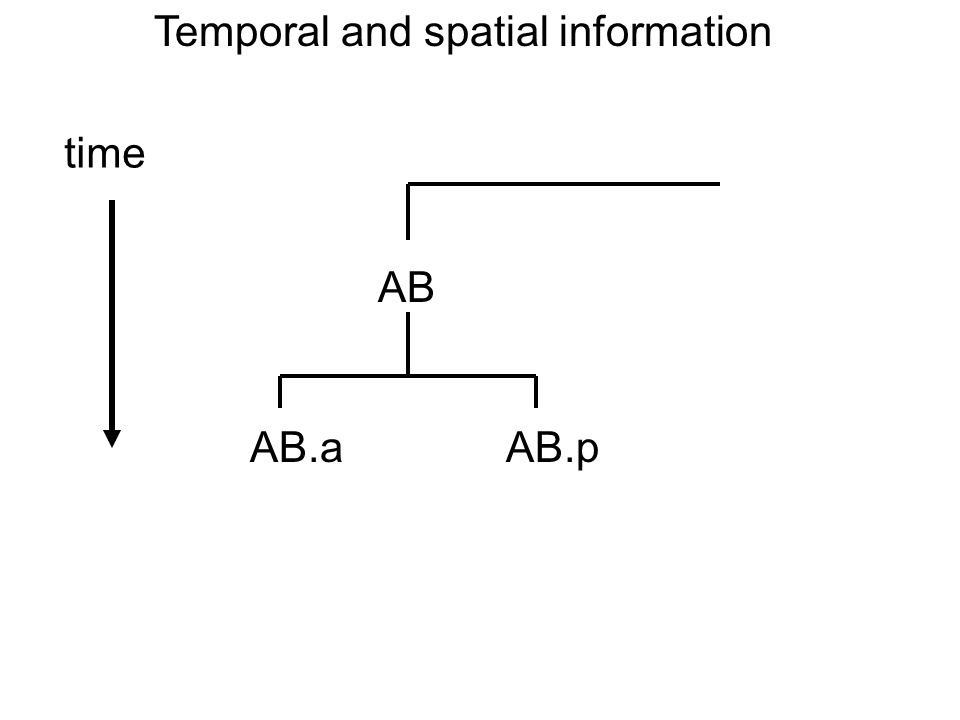 Temporal and spatial information AB time AB.aAB.p