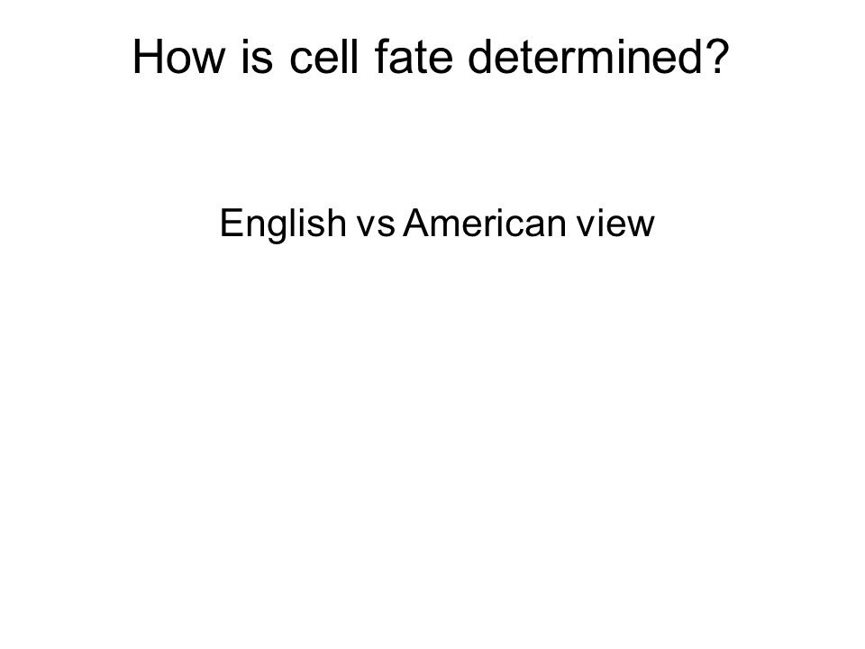 How is cell fate determined English vs American view