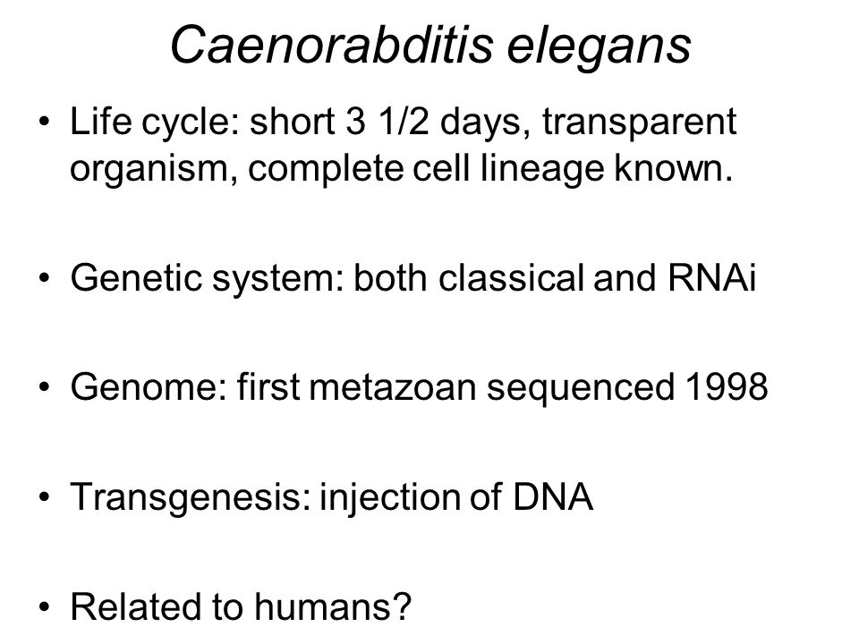 Caenorabditis elegans Life cycle: short 3 1/2 days, transparent organism, complete cell lineage known.