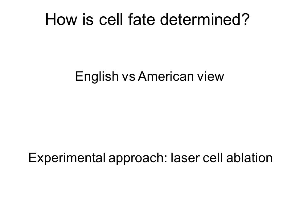 How is cell fate determined English vs American view Experimental approach: laser cell ablation