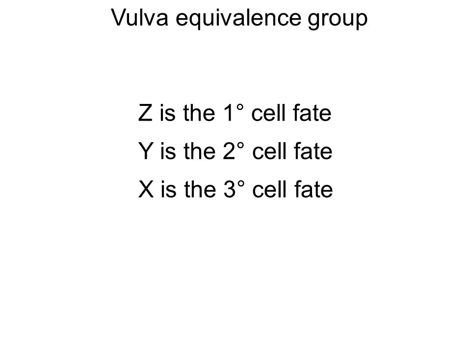 Z is the 1° cell fate Y is the 2° cell fate X is the 3° cell fate