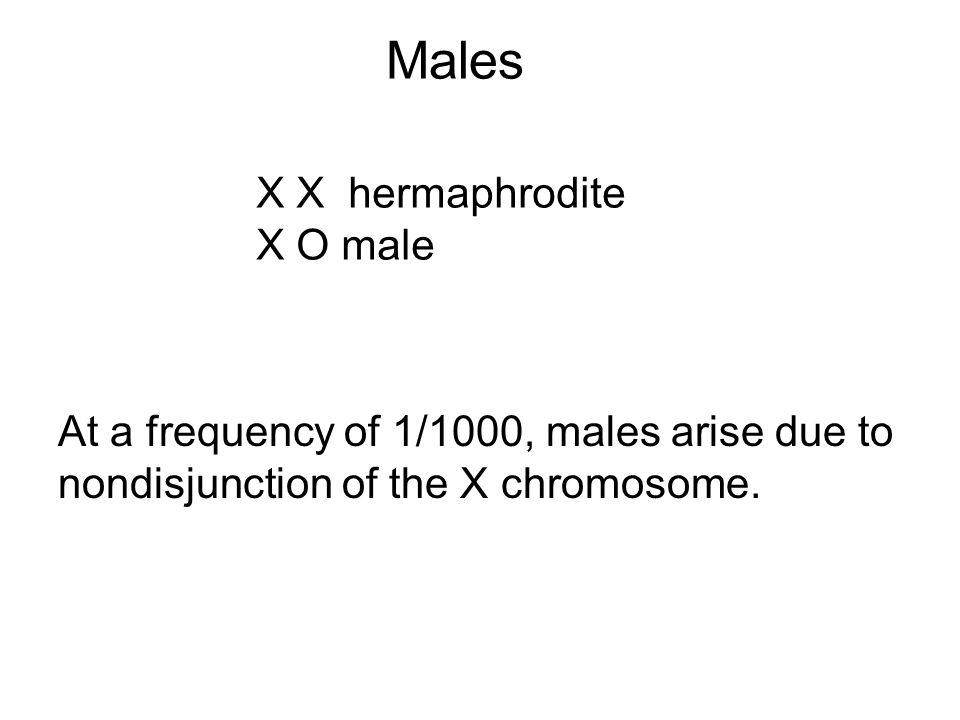 Males X X hermaphrodite X O male At a frequency of 1/1000, males arise due to nondisjunction of the X chromosome.