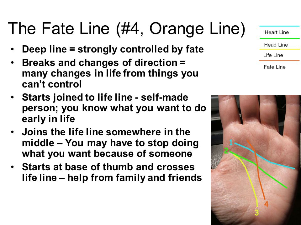 Deep line = strongly controlled by fate Breaks and changes of direction = many changes in life from things you can't control Starts joined to life line - self-made person; you know what you want to do early in life Joins the life line somewhere in the middle – You may have to stop doing what you want because of someone Starts at base of thumb and crosses life line – help from family and friends The Fate Line (#4, Orange Line)