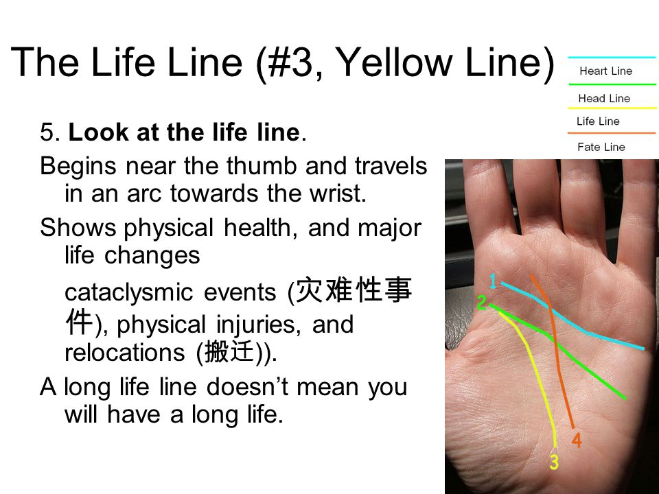 The Life Line (#3, Yellow Line) 5.Look at the life line.
