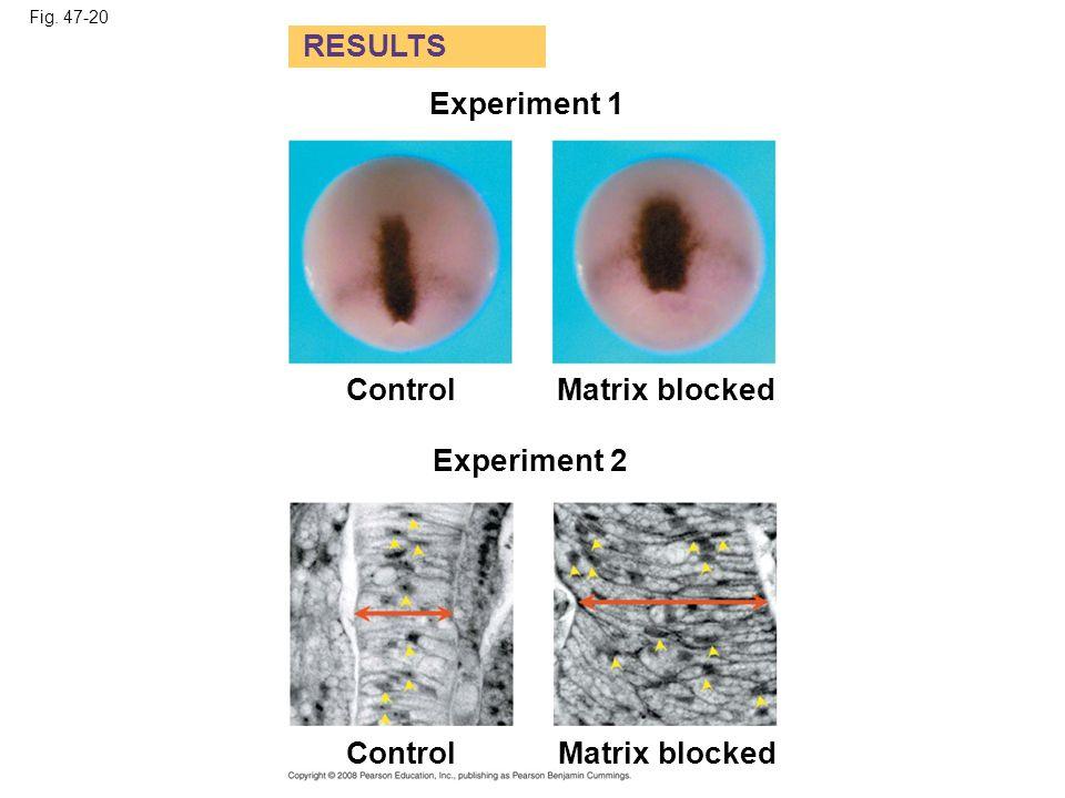 Fig. 47-20-1 Experiment 1 Matrix blocked RESULTS Control