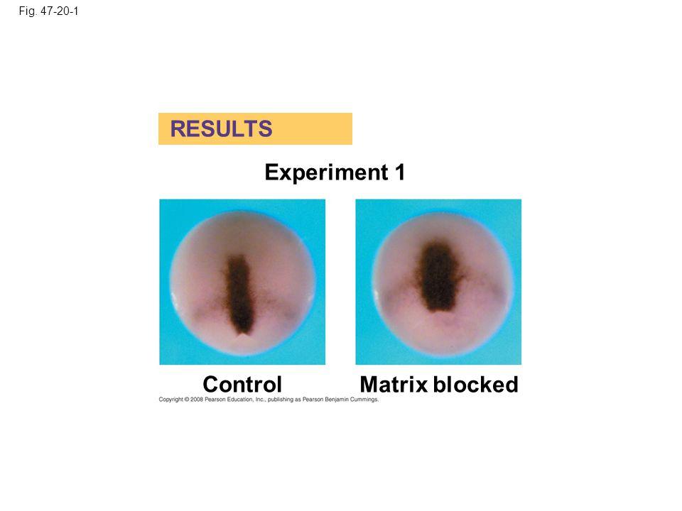 Fig. 47-20-2 Experiment 2 Matrix blockedControl RESULTS