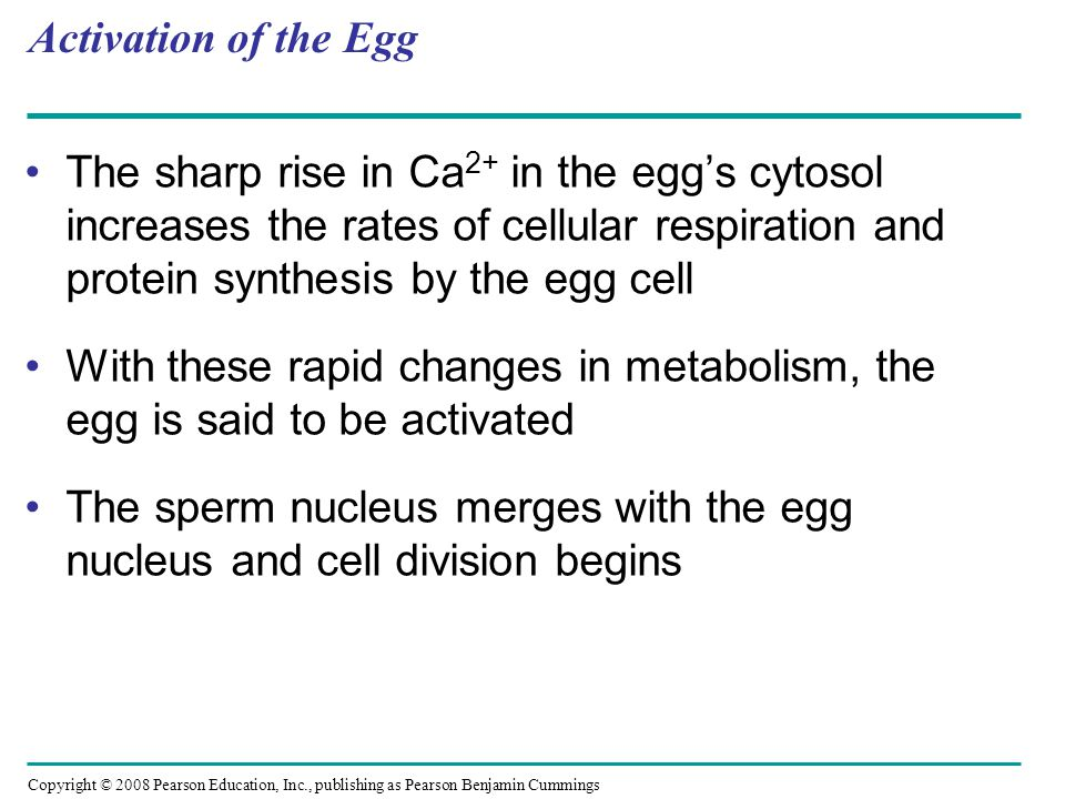 Copyright © 2008 Pearson Education, Inc., publishing as Pearson Benjamin Cummings Fertilization in Mammals Fertilization in mammals and other terrestrial animals is internal In mammalian fertilization, the cortical reaction modifies the zona pellucida, the extracellular matrix of the egg, as a slow block to polyspermy